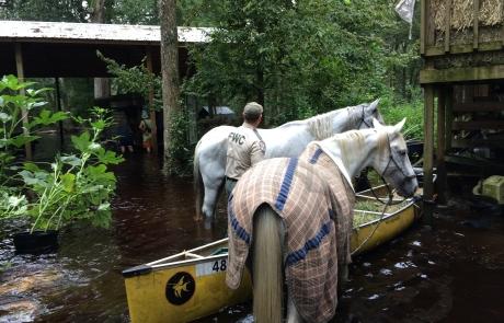 Florida Fish and Wildlife https://www.flickr.com/photos/myfwcmedia/37175665362/in/photolist-YD618C-eFHS2a-XTSZkY-eFQ3cq-eFKEfD-eFKwjV-eFPxrQ-eFHcUT-eFPWEL-eFH8xV-eFQVHE-eFHJfk-eFQTkQ-eFRASu-eFQvh5-eFR2sj-eFJdgi-bXTUmb-aCLr3p-eFJive-eFRy8G-eFJfN2-bXTXHw-bXTYY7-eFJzSt-9sHord-eFJXQr-eFQtwh-bEVMzL-eFJ4JD-eFJtWa-YD6cAY-eFHsTr-Du3xLd-Gbadat-EnLY5v-Ja8X4r-eFQQEf-Ei1Ba6-FzkHAS-DY7XrC-eFPcrA-eFPC7Q-eFQepu-cjJwd9-8BLLLb-FmuQ7P-eFHXZM-bXTW43-eFJa3M